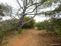 juniper trail