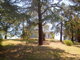 ground area trees