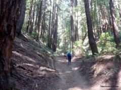 chown trail