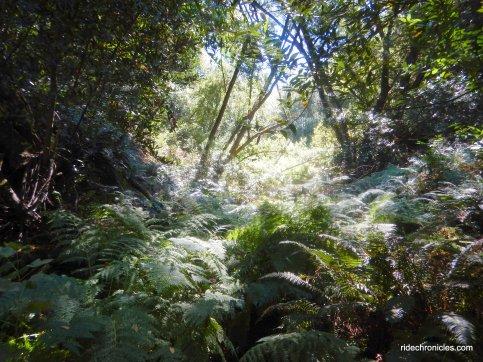 lower huckleberry path