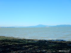 bay shoreline
