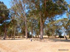 point pinole picnic area