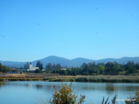 kennedy park ponds