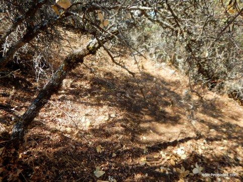 scramble off trail