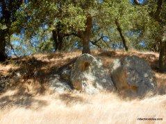 e fossil ridge rd