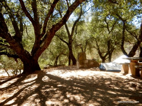 live oak campground
