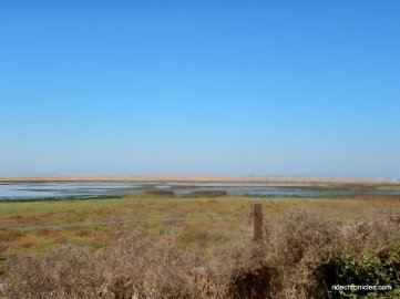 marshes