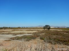 napa-sonoma marsh wildlife area