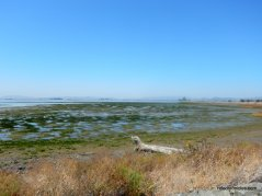 napa sonoma marsh wildlife area
