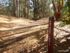 biazzi trail