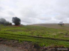 camino tassjara