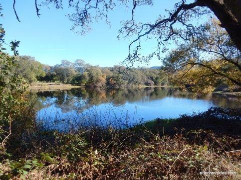 camille lake