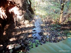 marie creek