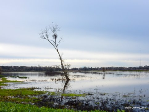 lost slough wetlands
