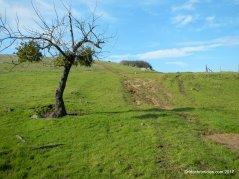 towards praire ridge trail