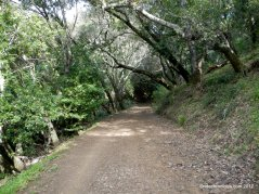 bay leaf trail