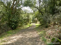 sinbad creek trail
