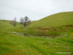 shady creek tr