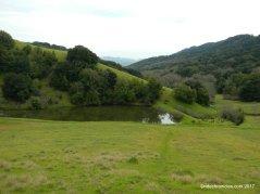 turtle pond trail