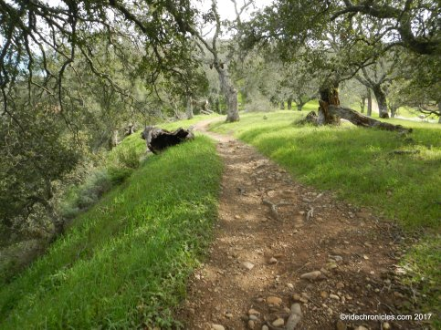 blue oak knoll trail