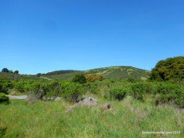 live oak trail