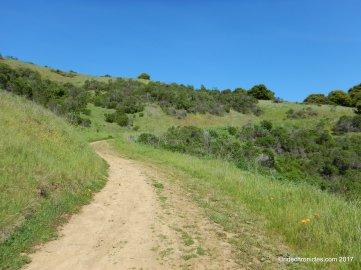 towhee trail