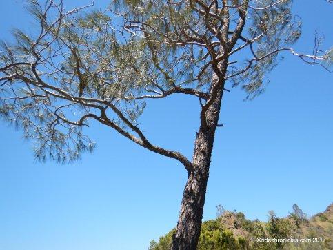 eagle peak tr