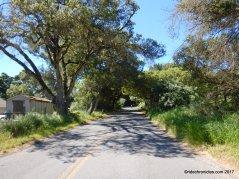 eucalyptus rd
