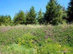 bloomfield rd