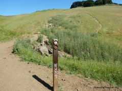 left-brushy peak loop trail