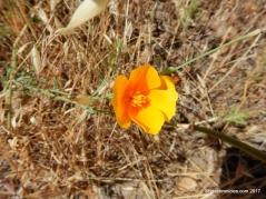 wildflowerswildflowers