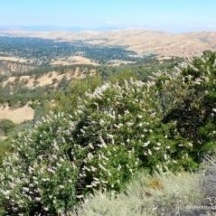 cardinet oaks rd