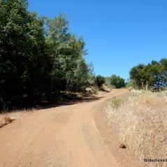 olympia trail