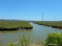 wildcat creek marsh
