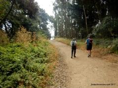 west ridge trailwest ridge trail