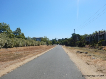 larkspur path