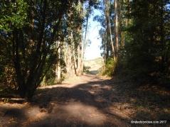 meadows canton trail