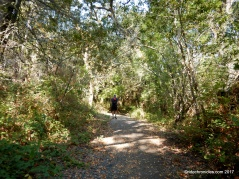 orinda connector trail