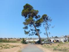glen cove park