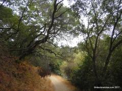 bass cove trail