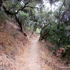 south columbine trail