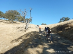 flat top trail