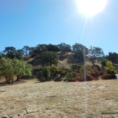 borges ranch tr