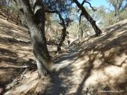 indian creek tr