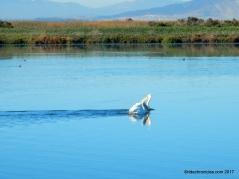 wildlife area pond 8