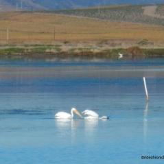 wildlife pond 8