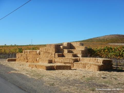 bouchaine vineyards