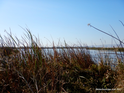 marsh tr
