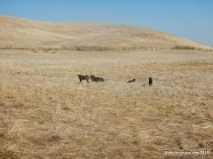 south pasture tr