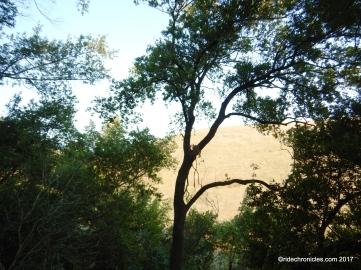 martin canyon creek trail